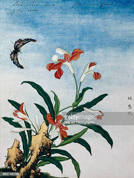 Chinese Watercolor of a Green Onion Flower