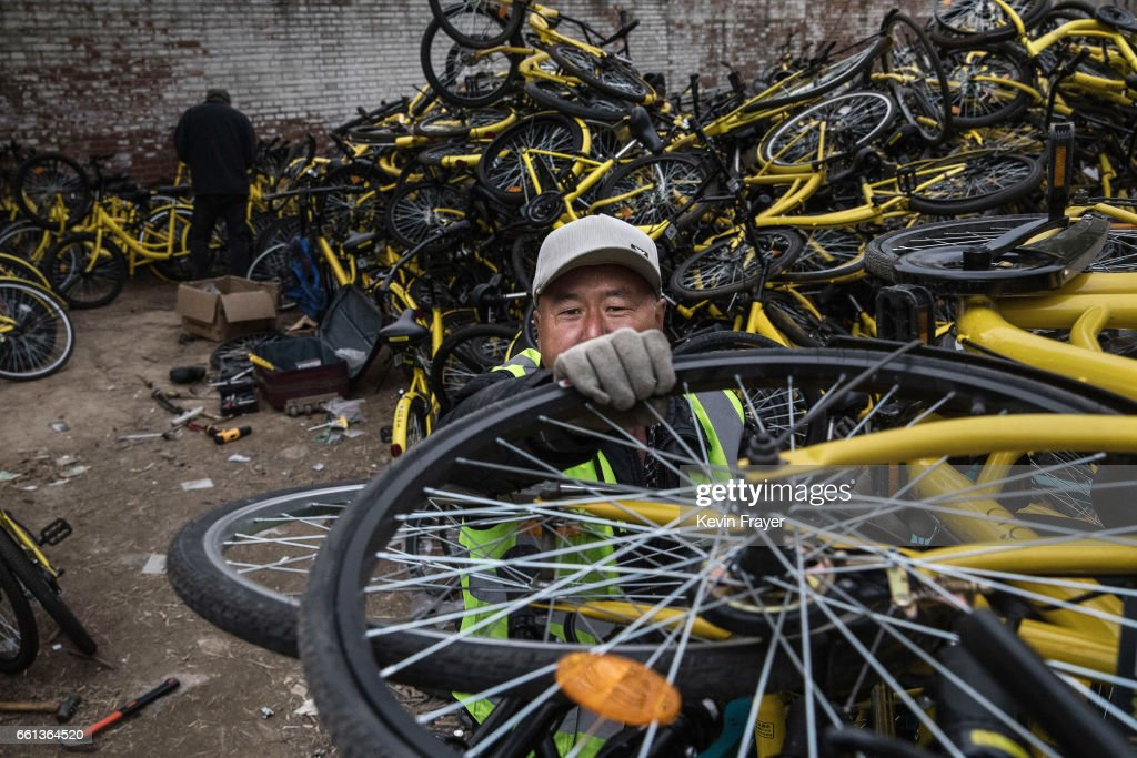 A Chinese worker from the bike share company Ofo Inc. unloads bicycles collected from the streets at a repair depot for the company on March 30, 2017 in Beijing, China. The popularity of bike shares has exploded in the past year with more than two dozen providers now battling for market share in major cities across China. The bikes are hailed as an efficient, cheap, and environmentally-friendly solution for commuters, where riders unlock the stationless bicycles using a mobile phone app, drop them anywhere for the next user, and spend as little as 1 yuan ($0.15) per hour. Given the bikes have several users a day - some of them inexperienced riders who swerve into traffic - they are often damaged, vandalized, or abandoned. Companies like Ofo routinely collect the battered two-wheelers and bring them to a makeshift depot that is part repair shop, part graveyard where they are either salvaged or scrapped. The bike shares are powering a cycling revival of sorts in a country once known as the 'Kingdom of Bicycles'. In the early years of Communist China, most Chinese aspired to own a bicycle as a marker of achievement. When the country's economic transformation made cars a more valued status symbol, the bicycle - a Chinese cultural icon - was mocked as a sign of backwardness. The bike share craze is also a boon for manufacturers who are now mass producing over a million bikes a month to meet demand, and the number of shared bike users will reach 50 million in China by the end of the year, according to Beijing-based BigData Research. Not everyone is cheering the revival though, as municipal officials are drafting new regulations to control the chaotic flood of bicycles on streets and sidewalks.