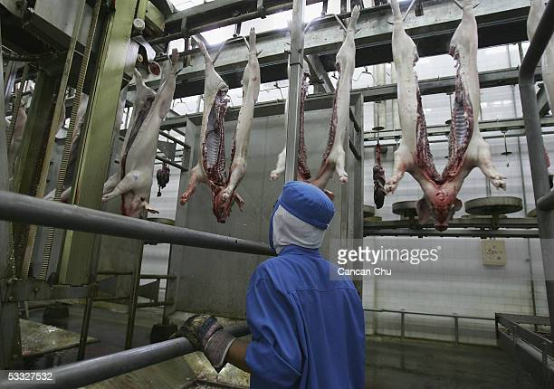 Chinese workers cut slaughtered pigs in a slaughterhouse on August 5, 2005 at a suburb of Beijing, China. China has launched nationwide campaigns to...