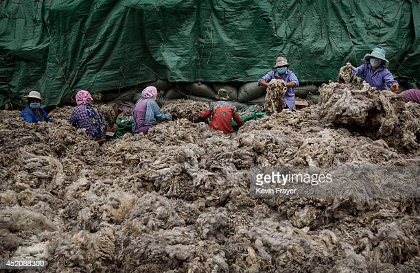 Chinese workers prepare sheep's wool before it is processed and bleached at a factory on July 12 2014 near Zhangzhou China The facility prepares wool...