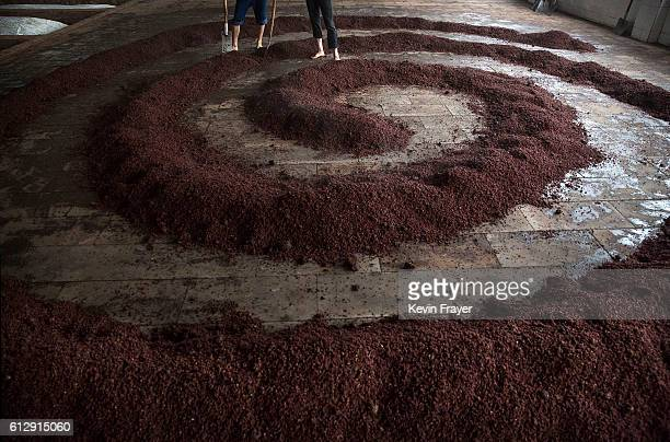 Chinese workers stand near steamed sorghum as it is readied for the first fermentation to be used in locally made wine called baijiu at the Maopu...