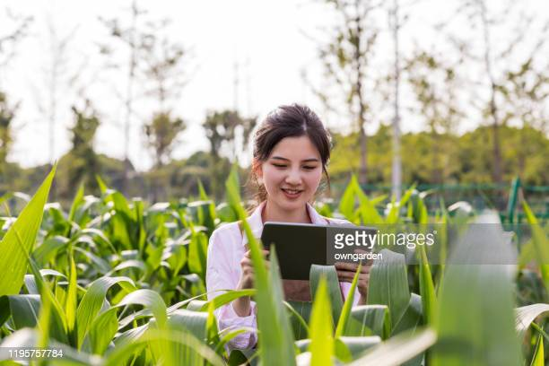 有機農場で収穫する中国の若い農家 - スマート農業 ストックフォトと画像