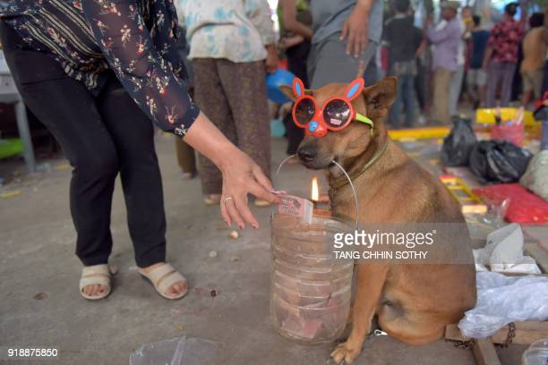 ChineseCambodian woman offers money to a dog 'begging' at a temple during the start of the Lunar New Year in Kandal on February 16 2018 Lunar New...