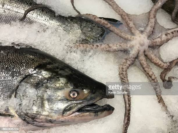 chinook salmon and octopus for sale - chinook salmon stock photos and pictures