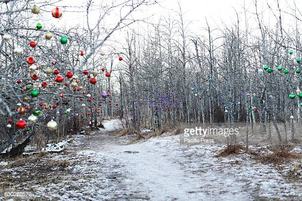 Chinook weather came to Calgary Alberta after a 14 day cold snap that saw temperatures of 30 degrees below centigrade Chinooks are weather phenoms...