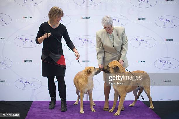 Chinook's attend the The 138th Annual Westminster Kennel Club Dog Show Press Conference at Madison Square Garden on February 6 2014 in New York City