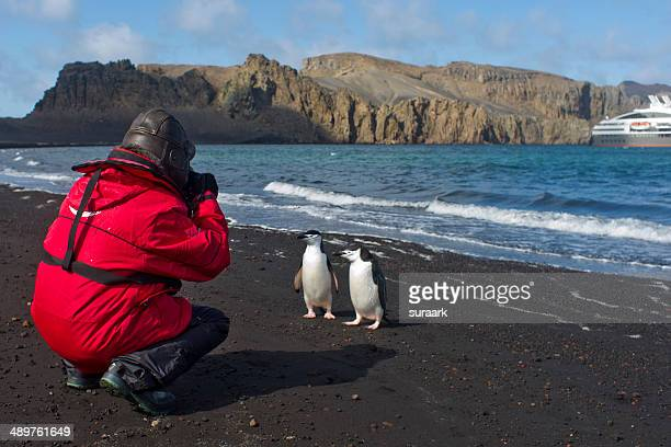 chinstrap penguins at deception island in antarcti - south shetland islands stock pictures, royalty-free photos & images