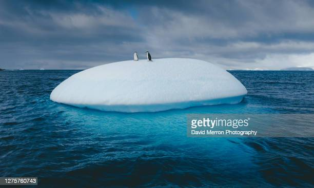 chinstrap penguins stand on top of iceberg in antarctica - 南極海峡 ストックフォトと画像