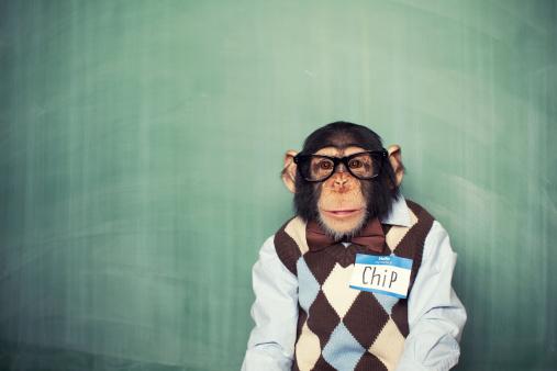 Chip the Chimp 143177058
