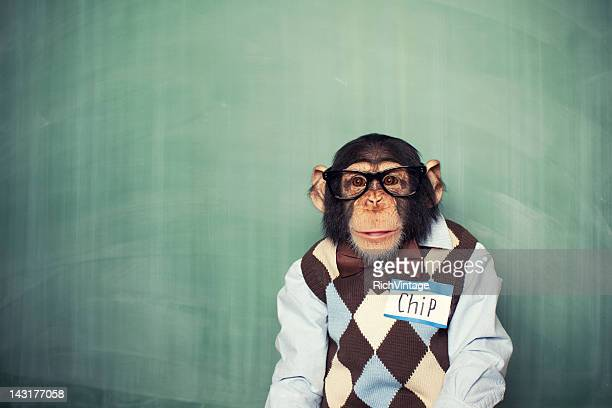 chip the chimp - primate stock pictures, royalty-free photos & images