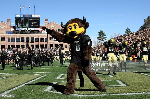 Chip the mascot of the Colorado Buffaloes supports his team as they host the Missouri Tigers at Folsom Field on October 31 2009 in Boulder Colorado...