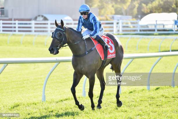 Chippenham ridden by Tahlia Hope returns to scale after winning the Ladbrokes Handicap at Caulfield Racecourse on January 17 2018 in Caulfield...
