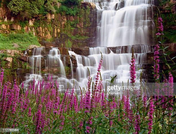 chittenango falls und lila streit - ogphoto stock-fotos und bilder