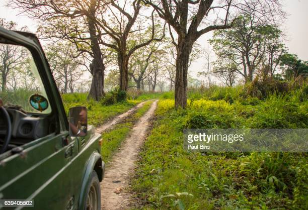 chitwan national park safari, terai region, nepal - terai stock pictures, royalty-free photos & images