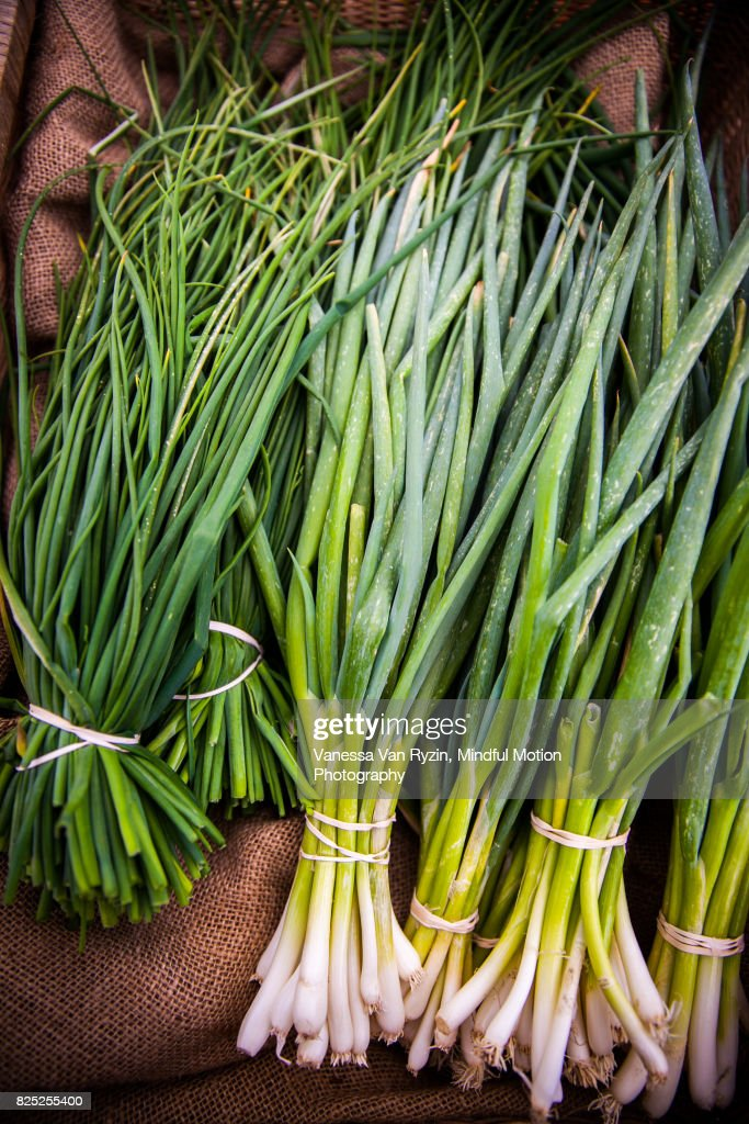 Chives : Stock Photo