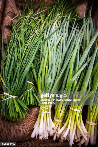 chives - vanessa van ryzin stock photos and pictures