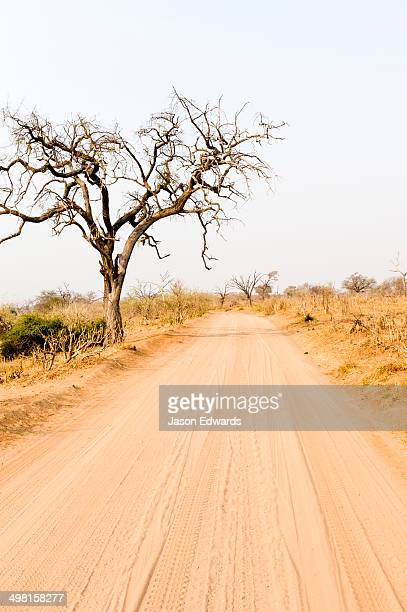 A sand track through parched bushveld at the height of the dry season.