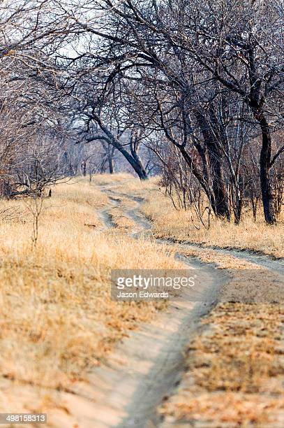 A sand track winds into a parched bushveld forest in the dry season.