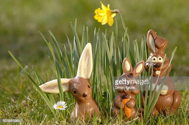 Chocolate bunnies in a meadow between yellow daffodils