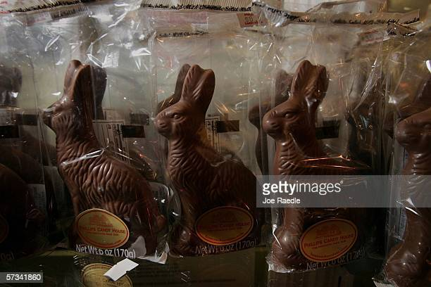 Chocolate Easter bunnies on sale at Phillips Candy House April 14 2006 in Dorchester Massachusetts The first edible Easter bunnies were made in...