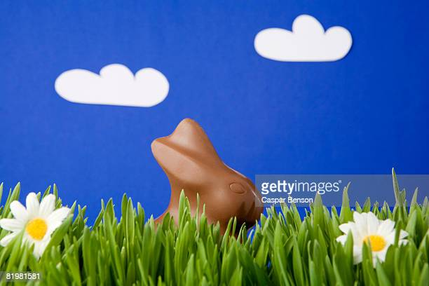 A chocolate Easter Bunny in grass