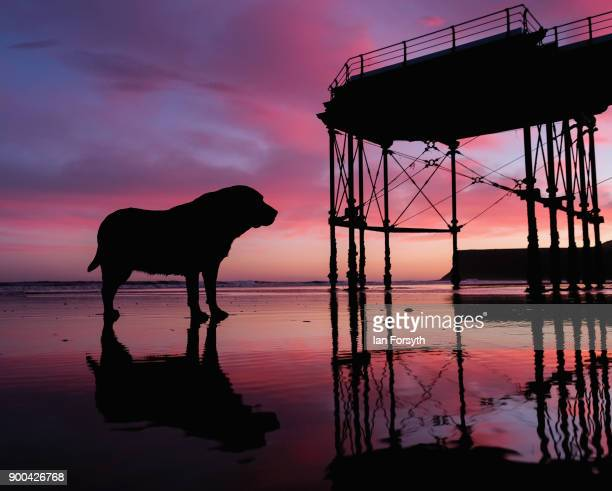 Chocolate Labrador Tia stands on the beacn near the pier as clouds light up dramatically as the sun rises on January 2 2018 in SaltburnByTheSea...
