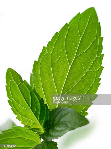 chocolate mint - mint julep stock pictures, royalty-free photos & images