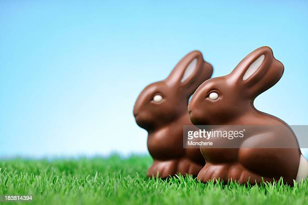 Chocolate rabbits on grass