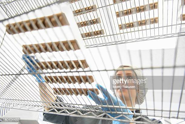 chocolatier inspecting the quality of chocolate on shelves in chocolate factory, low angle view - chocolate factory stock photos and pictures
