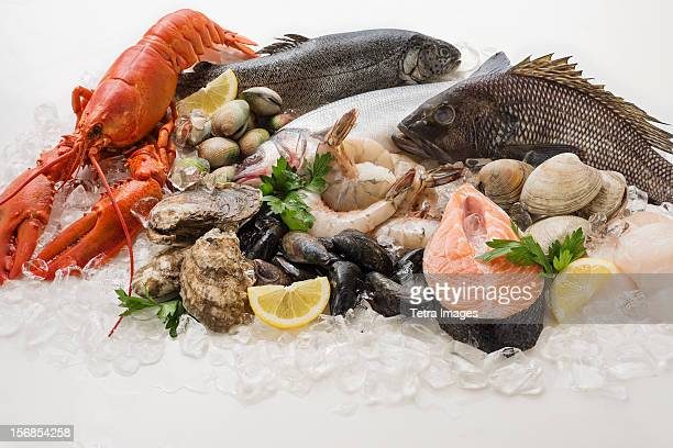choice of seafood, studio shot - fresh seafood stock photos and pictures