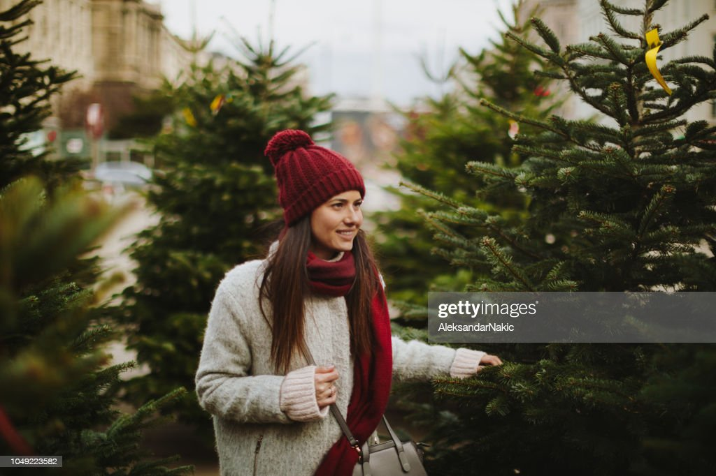 Choosing a Christmas tree : Stock Photo