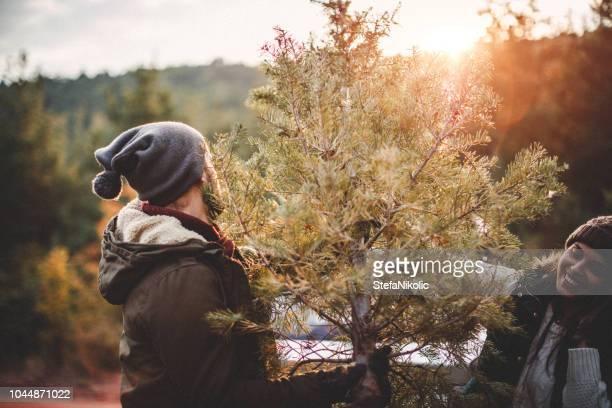 choosing a pine tree for christmas