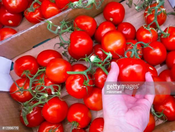 Choosing good Ripe, organic tomato in shop.