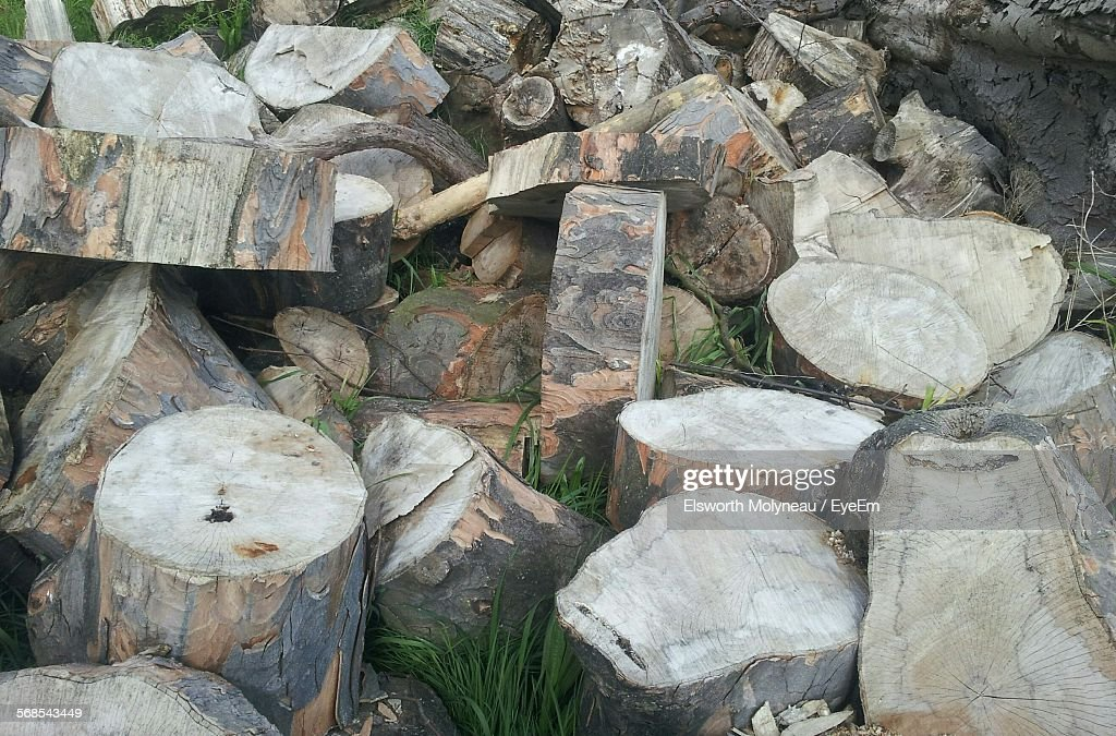 Chopped Logs On Field : Stock Photo