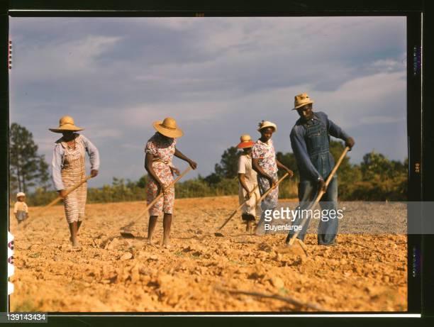 Chopping cotton on rented land near White Plains, Greene County, Georgia, 1941.