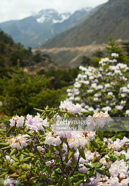 chopta valley in northern sikkim, india - valley stock pictures, royalty-free photos & images
