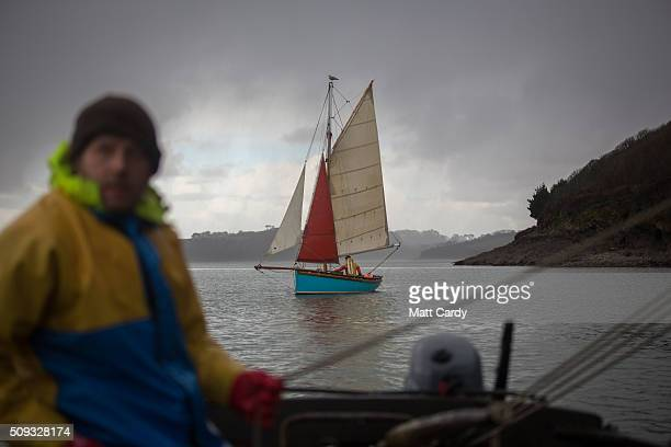 Chris Ranger sails his original wooden river oyster sail boat the Alf Smythers in the Fal Oyster fishery on the River Fal to gather wild native Fal...