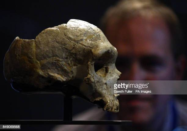 Chris Stringer a Merit Researcher at the Natural History Museum London face to face with a Neanderthal skull at the press launch of the the new...