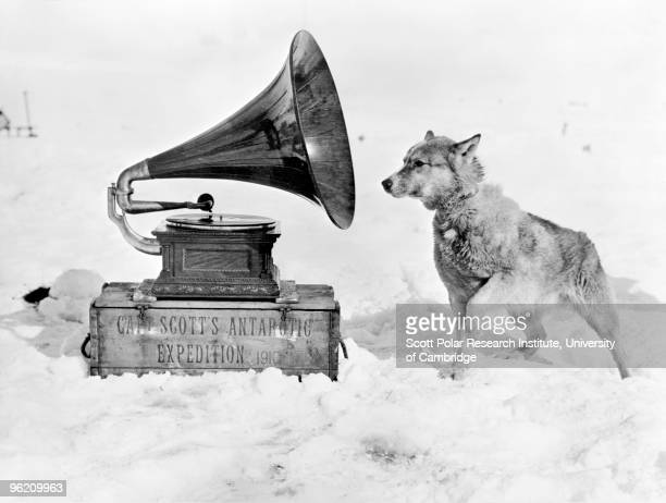 Chris the sled dog listens to a gramophone in the Ross Dependency of Antarctica during Captain Robert Falcon Scott's Terra Nova Expedition to the...