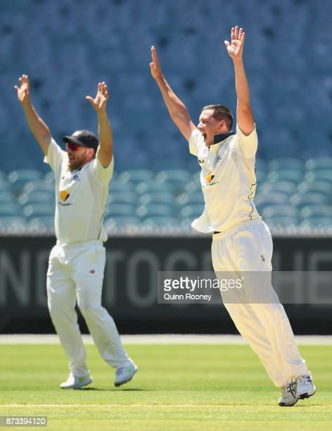 Chris Tremain of Victoria appeals for the wicket of Tim Paine of Tasmania during day one of the Sheffield Shield match between Victoria and Tasmania...