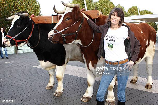 Chrissie Hynde attends photocall to launch'Cows and the Earth' a story of kinder farming at Southbank Centre on October 27 2009 in London England