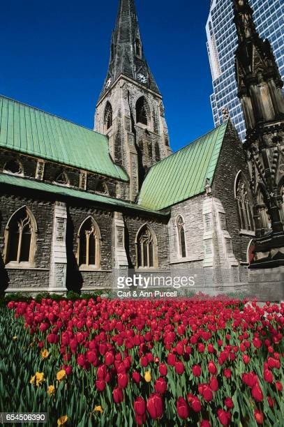 Christ Church Cathedral and Red Tulips