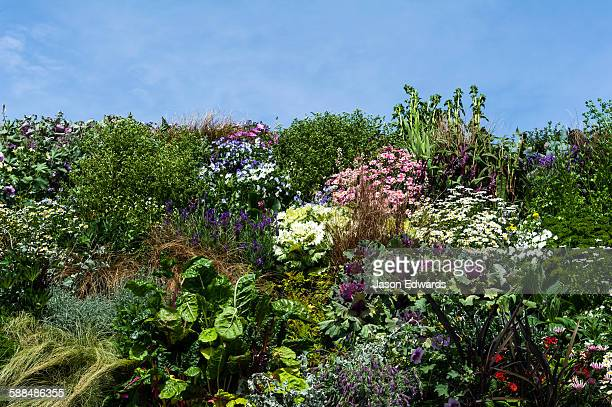 Lush and colourful vertical gardens filled with flowers and vegetables in a city square after an earthquake.