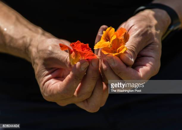Christian Lyons who has lived in Willowsford for 2 years shows off some nasturtium edible flowers that he picked The Willowsford development...