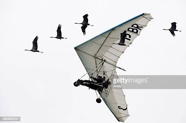 Christian Moullec flying with a microlight and his geese to heighten public awareness of the protection of migratory birds