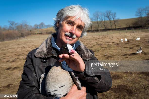 Christian Moullec is photographed for Paris Match with his dwarfs geese from Scandinavia on February 27 2018 in Aurillac France