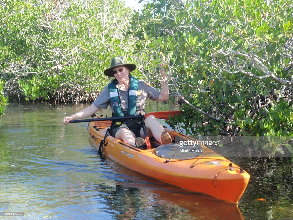 Christiana Admiral, chief of interpretation at Biscayne National Park, has to take her kayak paddle apart to navigate a narrow creek in the Biscayne National Park, Florida.