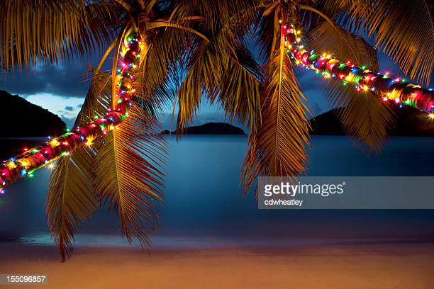 Christmas At The Caribbean Beach Rf Hammock Between Palm Trees With Lights