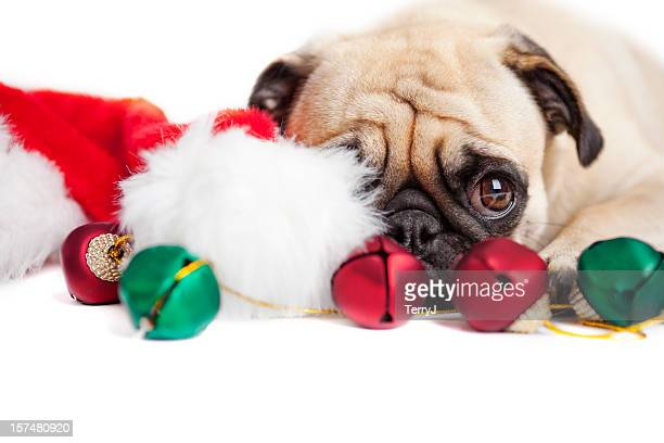 Christmas Bashful