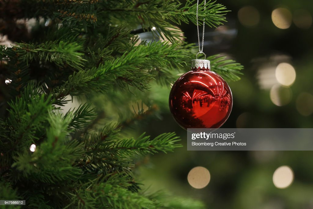 A Christmas bauble hangs from a tree : Stock Photo